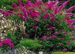 Kwiaty ogrodowe kwitnące całe lato