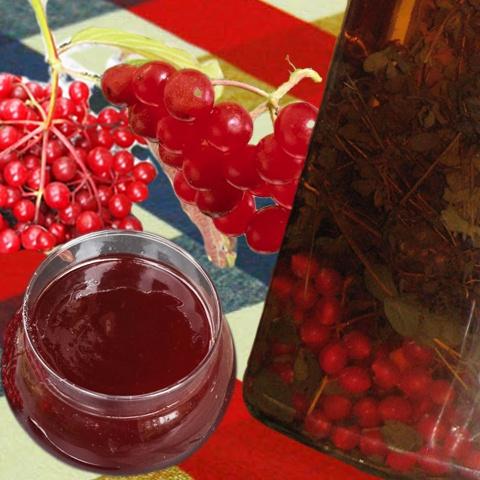 Калина ягода настойка рецепт