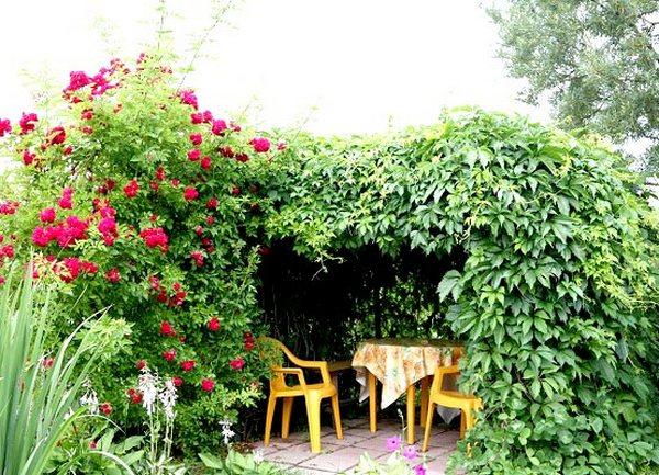 Wieloletnie Pnące Rośliny Do Altanki