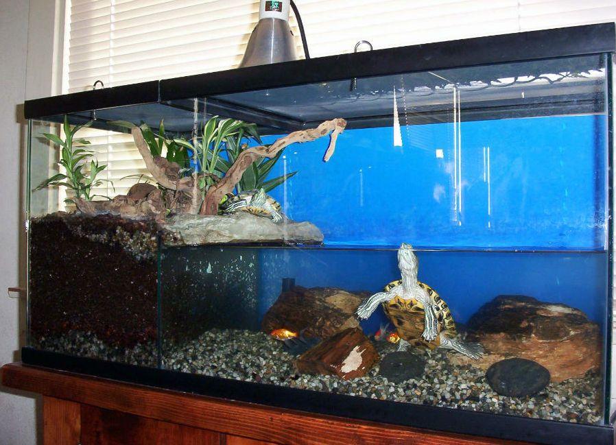 Содержание красноухих черепах в домашних условиях фото