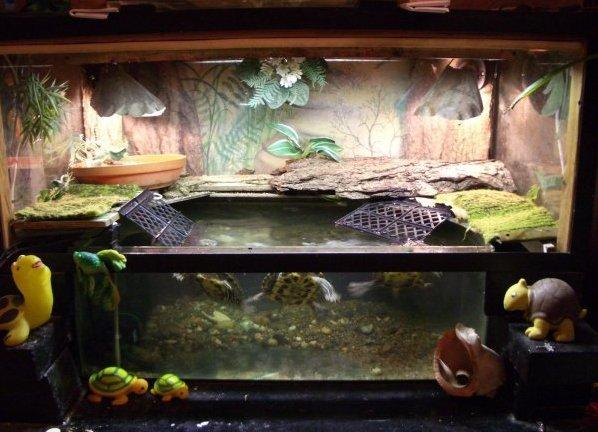 Дом для красноухих черепах