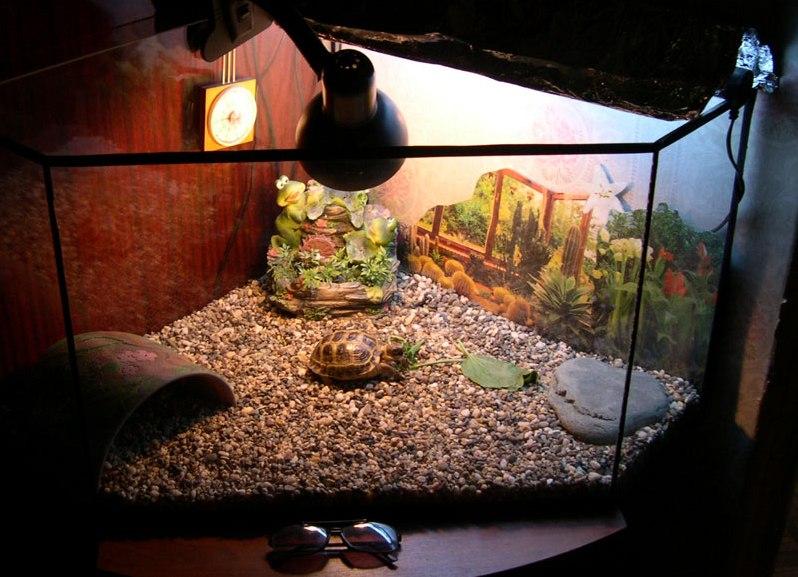 Как правильно содержать домашних условиях черепаху 834