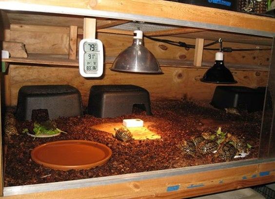 Akwarium Dla ż 243 łwia Czyli Urządzenie Terrarium ż 243 łwia